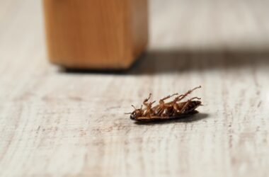 Cockroach Playing Dead