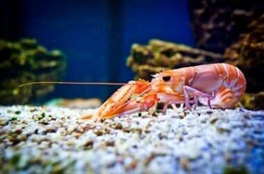 are cockroaches and prawns related?