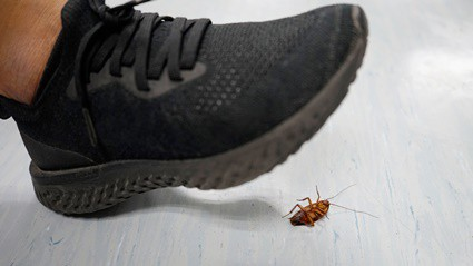 are cockroaches hard to squish?