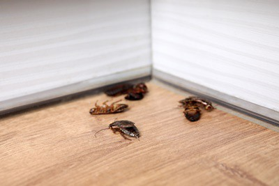 are cockroaches heat resistant?