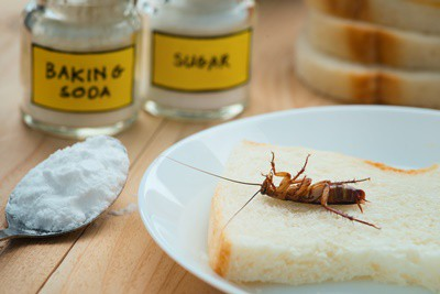 can baking powder kill cockroaches?