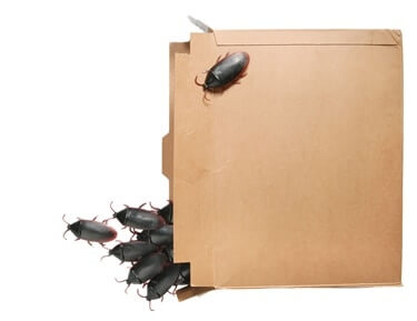 can cockroaches chew through cardboard?