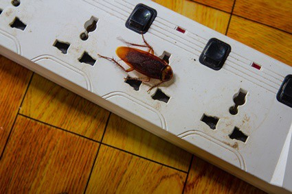 can roaches cause electrical fires?