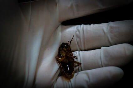 cockroach head chopped off