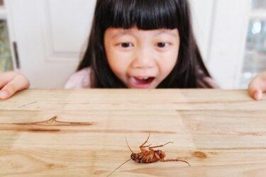 cockroach phobia