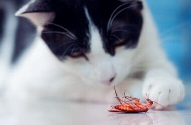 do cats keep cockroaches away?