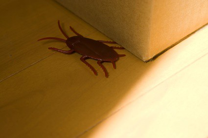 do cockroaches like cardboard boxes?