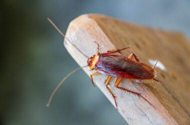 do cockroaches serve a purpose?