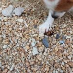 do dogs deter cockroaches?