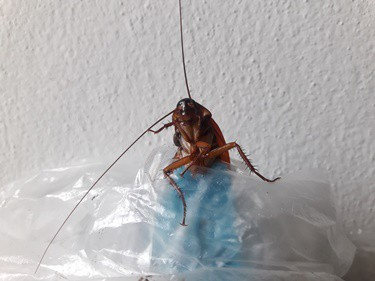 do plastic bags attract roaches?