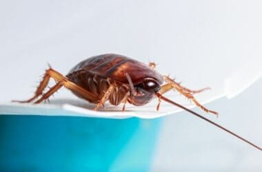 how cockroaches run with six legs