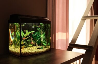 how to keep roaches away from fish tanks