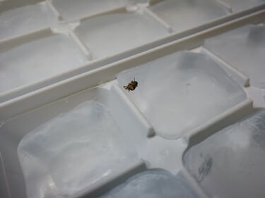 how to remove roaches from a from a refrigerator