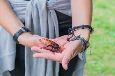 pet cockroach care