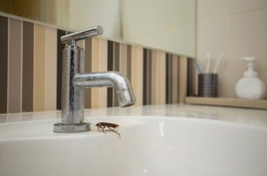 reasons for cockroaches in bathroom