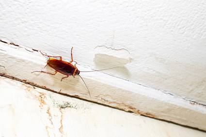 very small cockroach