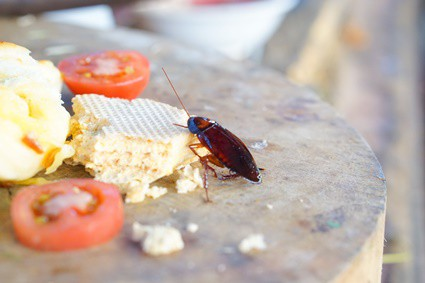 what foods attract cockroaches?