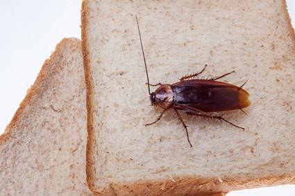what to do if you find a cockroach in your food