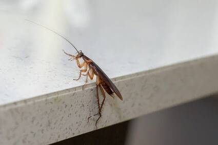 what to do if you see a cockroach