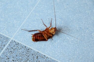 why cockroaches don't die easily