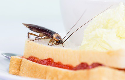 why do cockroaches fly when it's hot?
