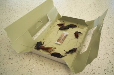 why do cockroaches like cardboard?