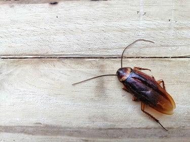 why do cockroaches move their antennae?