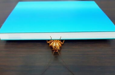 do cockroaches hide in books?