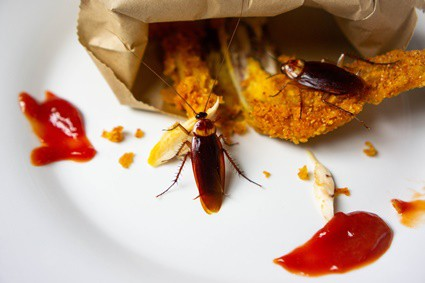 will cockroaches leave if there is no food?
