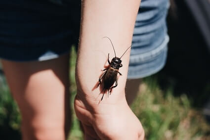 can cockroaches live in your hair?