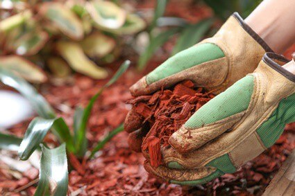 mulch that repels cockroaches