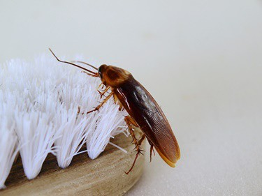 what frequency repels roaches?