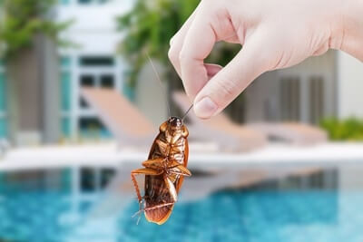 where do cockroaches hide in hotels?