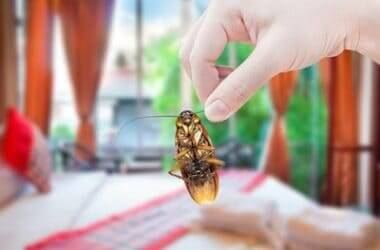 what attract roaches to your bedroom?