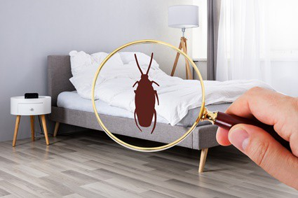 where do cockroaches hide in a bedroom?