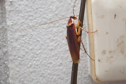 are roaches attracted to electrical outlets?