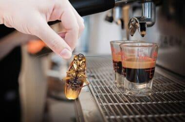do roaches like coffee makers?