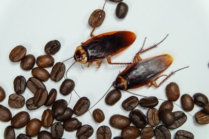 how to clean roaches out of coffee makers