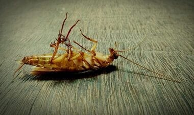 how to get rid of dead roaches