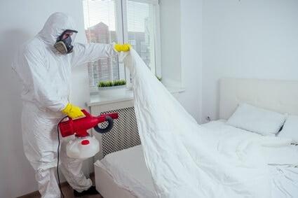 do cockroaches infest mattresses?